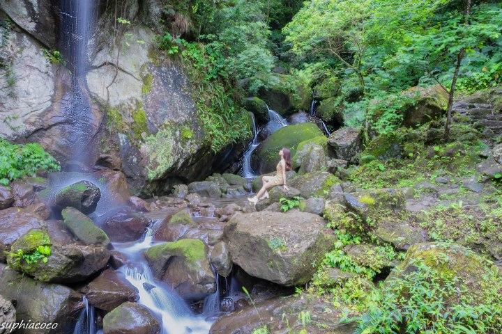 旅遊|新竹山林|純淨綠光小學 與霧氣瀰漫的筆直杉林 馬武督探索森林逃離都市喧鬧
