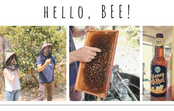 新竹|旅遊|帶你去可愛蜜蜂生態導覽 親手採收蜂蜜 享受仲夏清甜蜂蜜飲品 愛蜂園